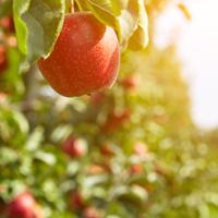 Impact du changement climatique sur la filière fruits et légumes : une matinée pour faire le point