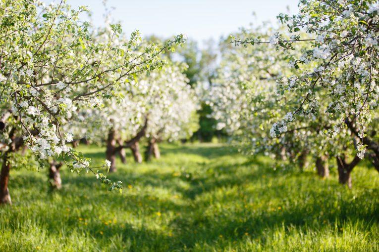 fruits légumes changement climatique - Aprifel